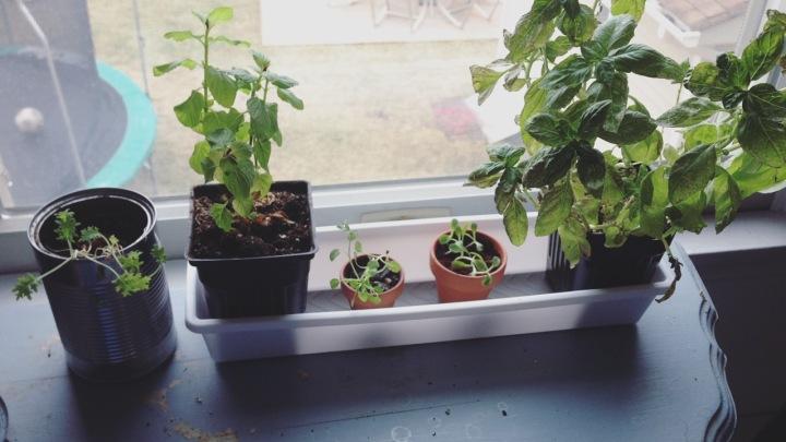 How to Enjoy Your Indoor Herb Garden All YearRound